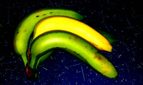 Frühreife Banane