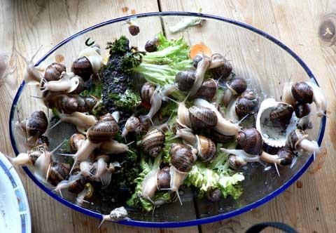 Gedränge im Salat